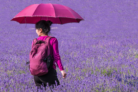 Chris Davalle - Lavender Umbrella